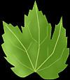 Ivy_leaf_s