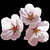 Sakura2s
