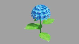 Hydrangea_5s