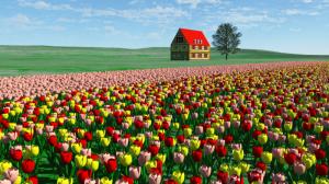 Tg4_tulip3color_s