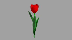 Tulip_2s